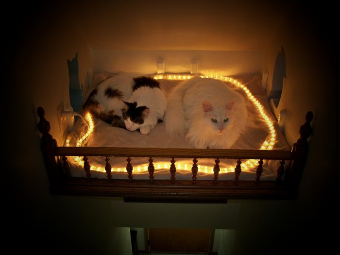 cat-house-bed