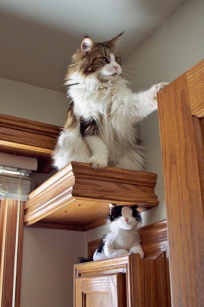cat-house-shelf