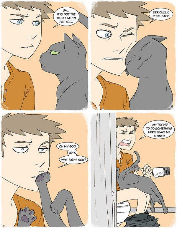 cat human toilet