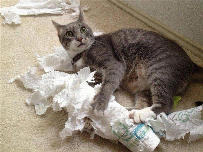 cat paper tear