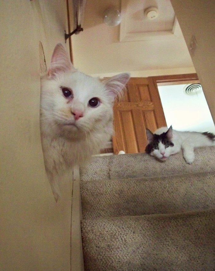 cat-peek