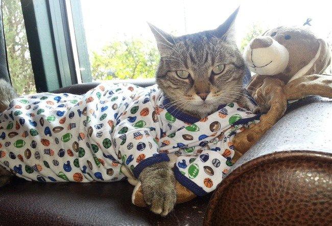 cat pyjamas teddy bear