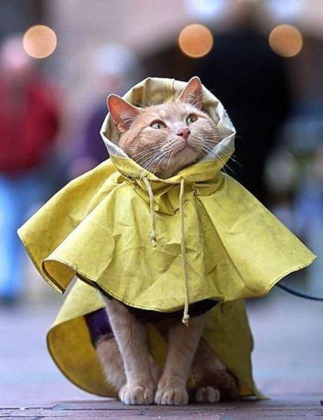 cat raincoat