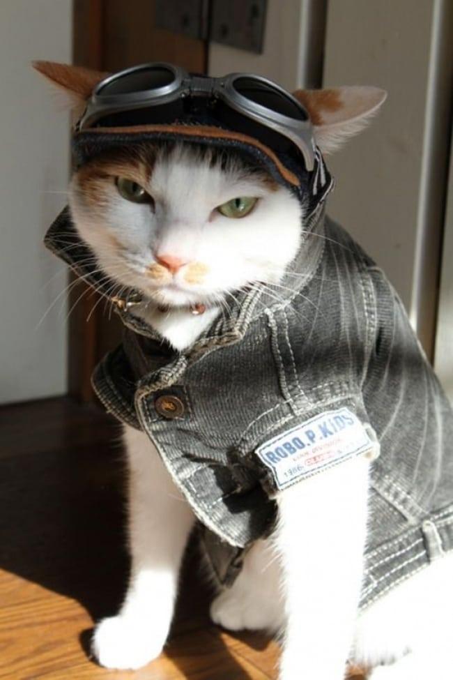 cat shades jacket