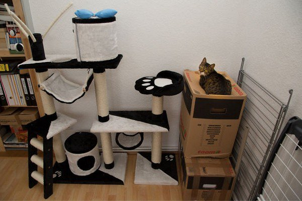 cat sit box cat gym