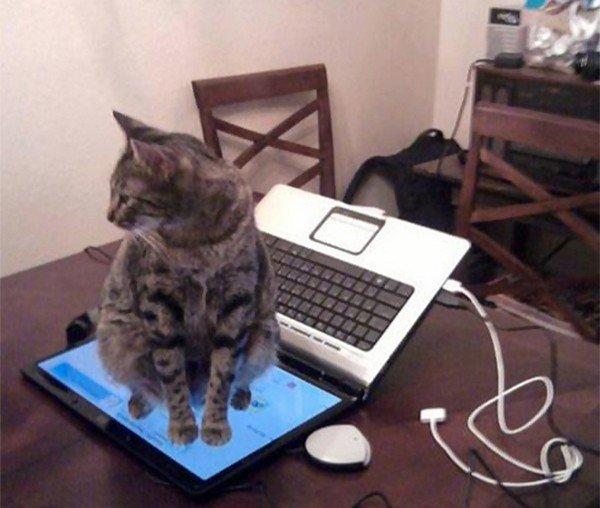 cat sitting computer