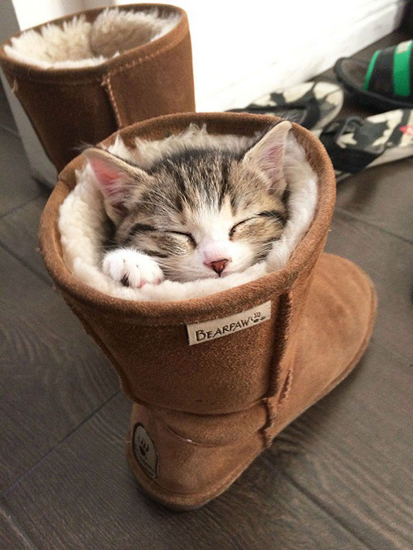 cat sleeping boot