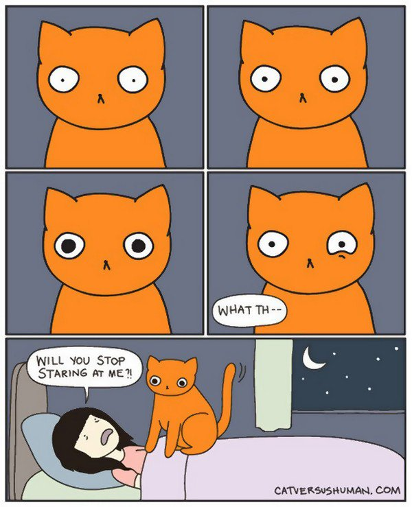 cat staring woman bed