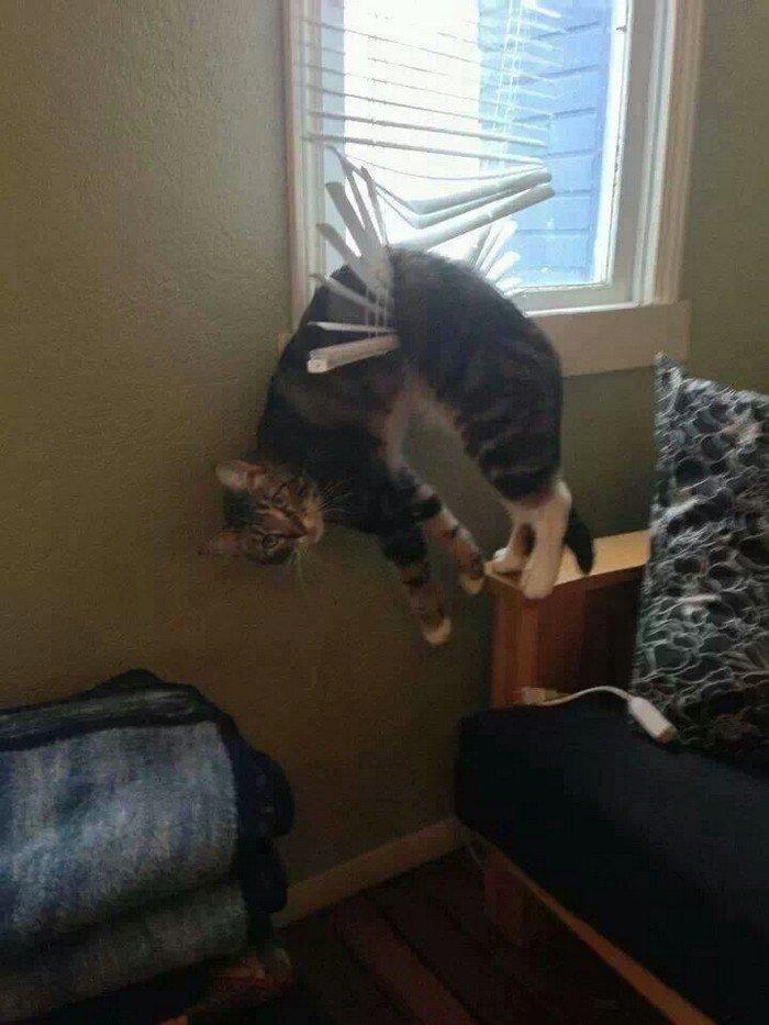 cat stuck blinds