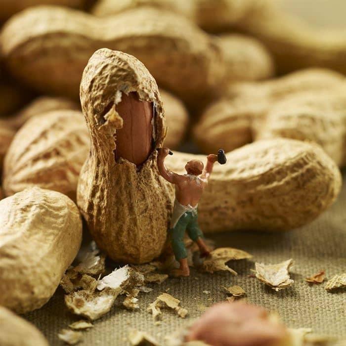 chisel nut minimiam