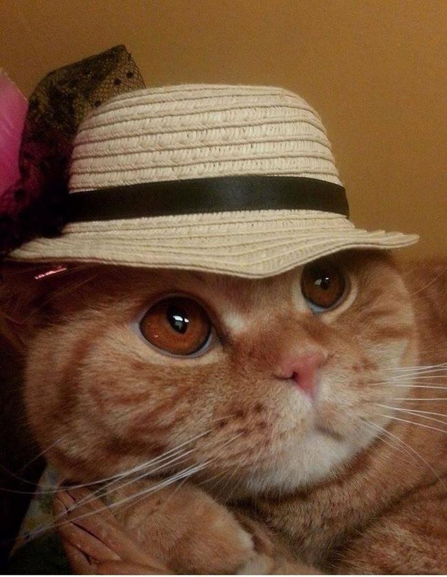 close up cat hat
