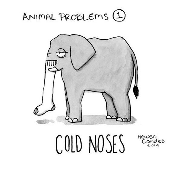 cold noses