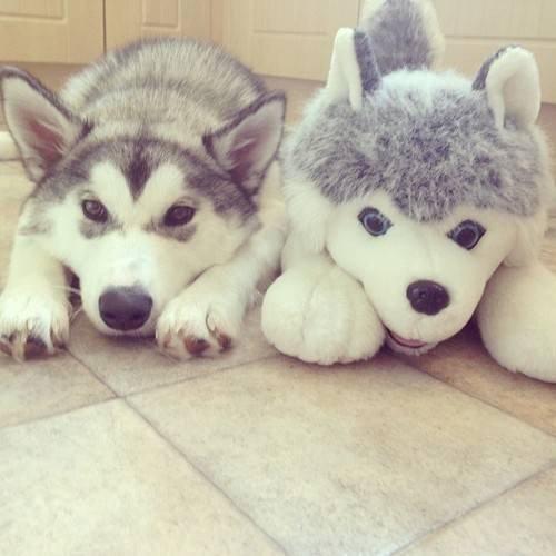 dog beside stuffed dog