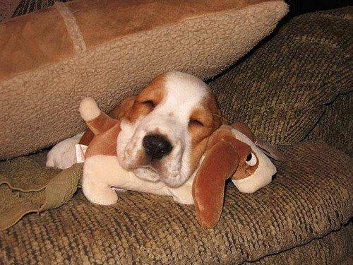 dog head sleeping stuffed toy