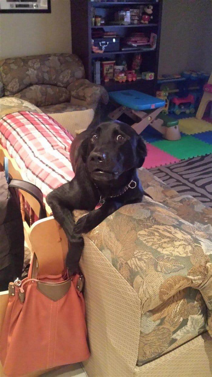 dog pickpocket