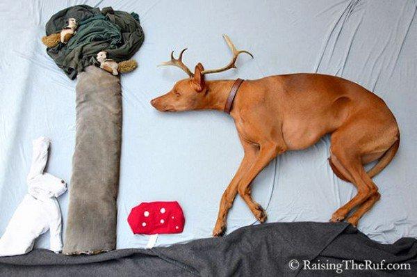 dog sleeping animals