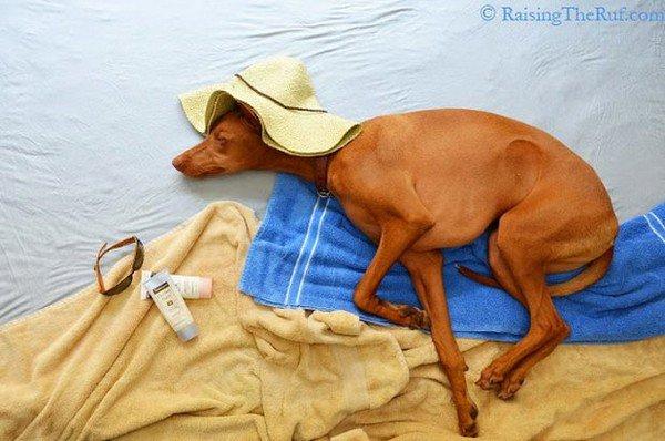 dog sleeping beach