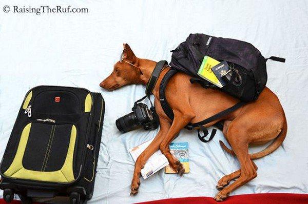 dog sleeping case camera