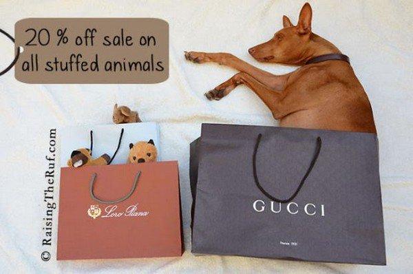 dog sleeping for sale