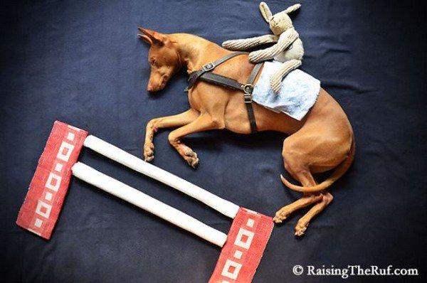 dog sleeping horse
