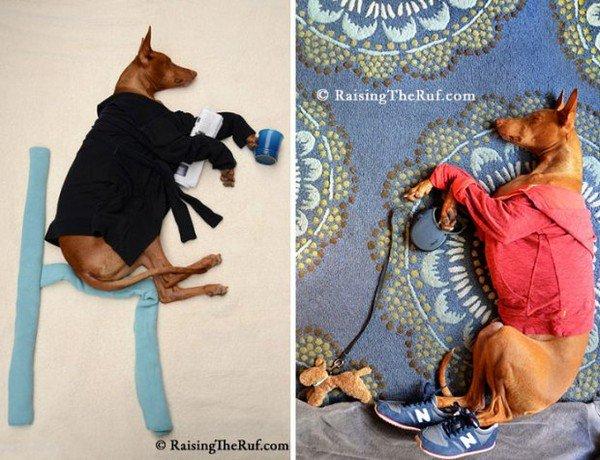 dog sleeping morning routine