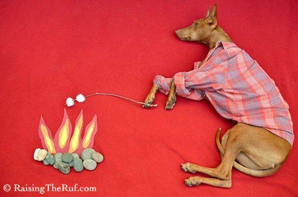 dog sleeping toasting marshmallows