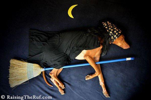 dog sleeping witch