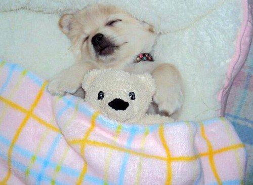 dog sleeping with stuffed bear