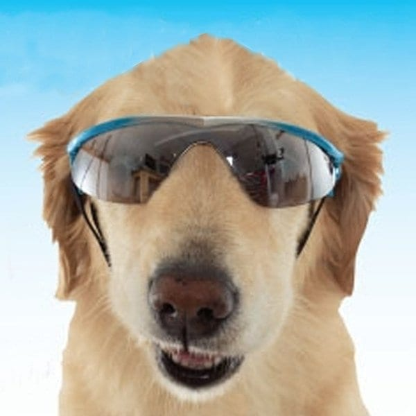 dog-sunglasses