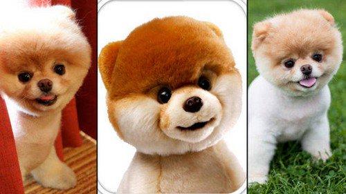 dog toy lookalikes row