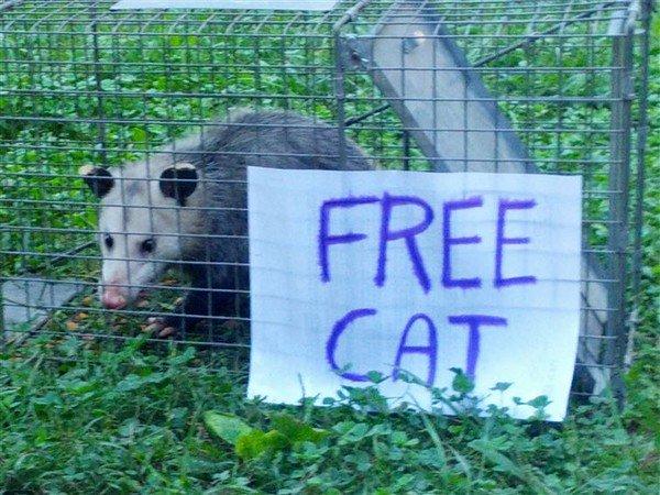 free cat sign