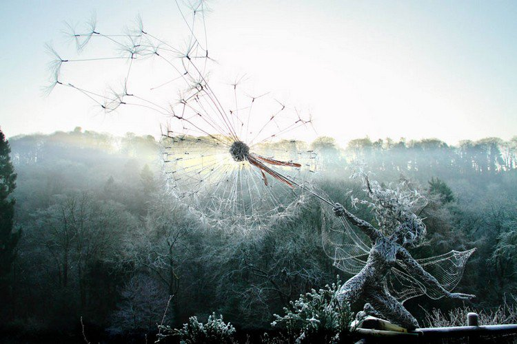frosty fairy dandelion