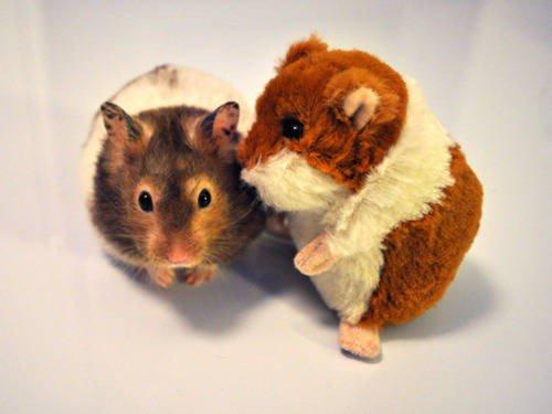 hamster stuffed hamster