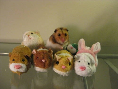 hamster with toy hamsters