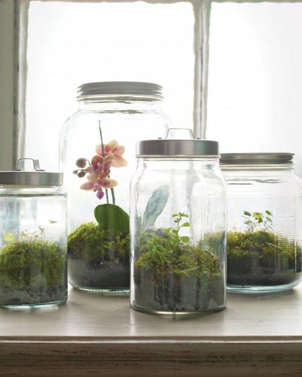 ikea-storage-container-terrariums