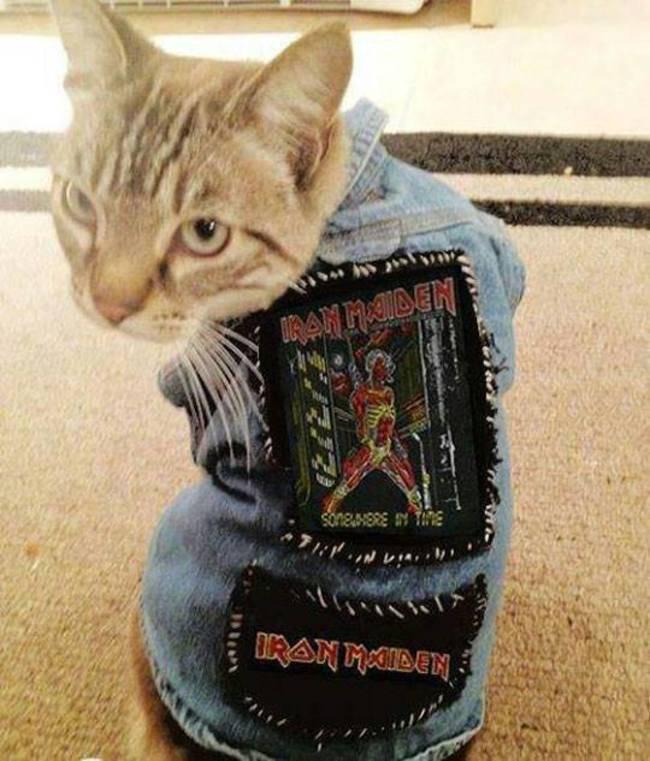iron maiden jacket cat