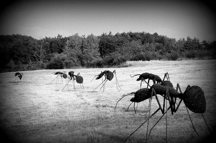 iron wire ants