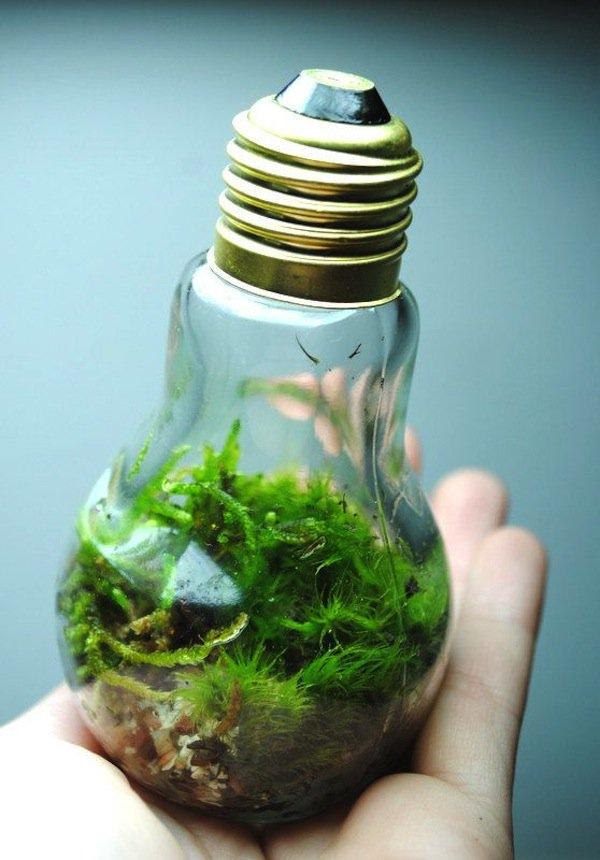 light-eco