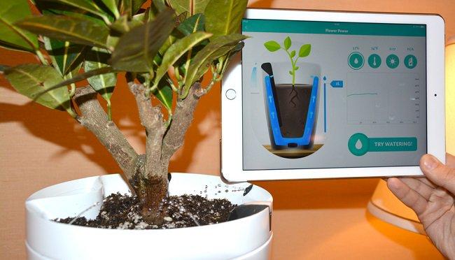 new-parrot-pot-app