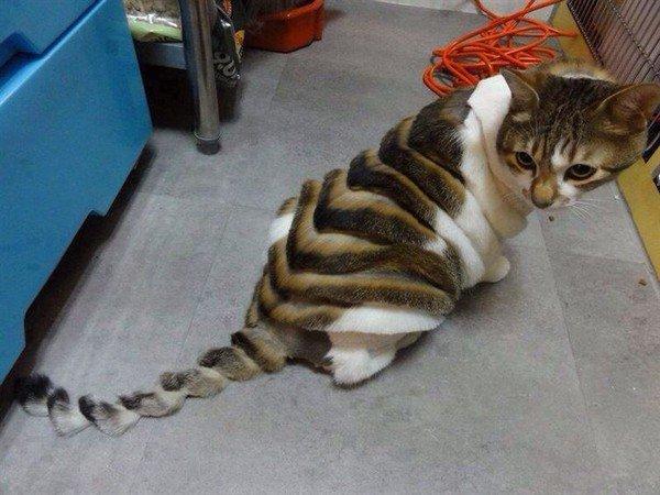 strange hair cat
