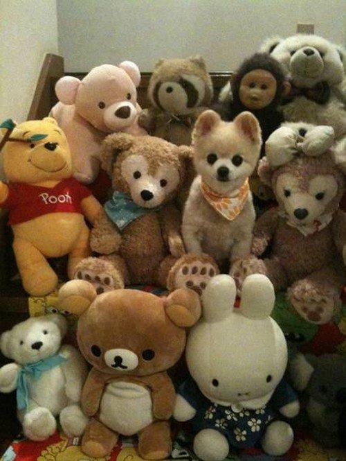 tiny dog stuffed toys