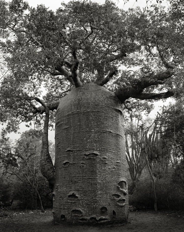 trees-cylinder