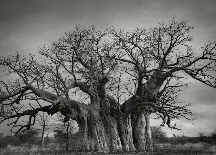 trees-rootss