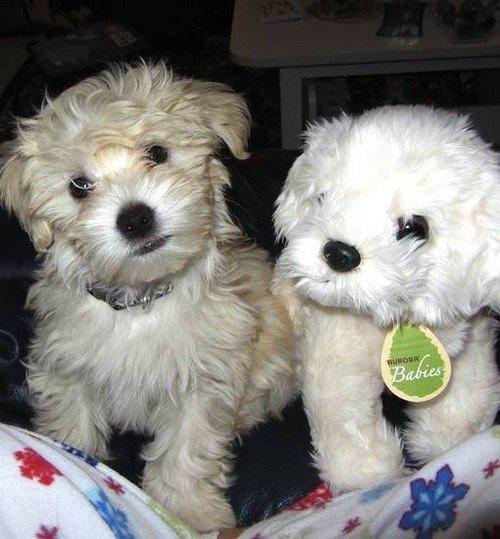 white dog white stuffed dog
