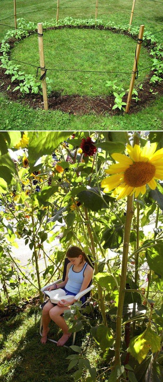 yard-sunflower