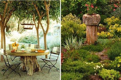 yard-tree-stumps