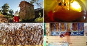 Automatically Harvest Honey