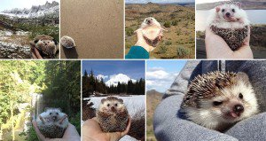 Biddy Travelling Hedgehog