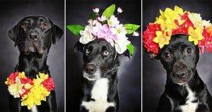 Black Dog Flower Photography