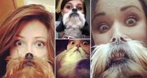Cat And Dog Beards